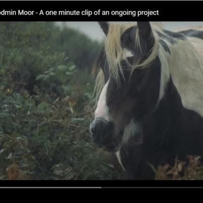 Wild Horses on Bodmin Moor – Video