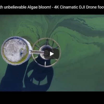 Colliford Lake with unbelievable Algae bloom! – Video
